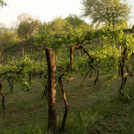 Martignago | Secco Pistoia | Bollicine Italiane