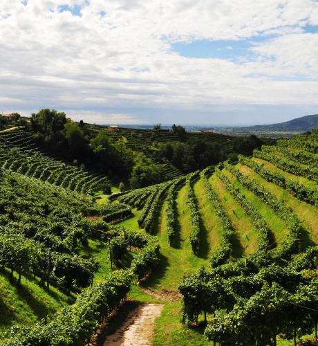 Tanorè | Secco Pistoia | Bollicine Italiane