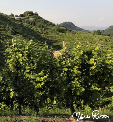nani rizzi | Secco Pistoia | Bollicine Italiane